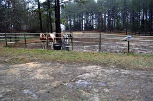 Jan 12 2015 horses in rain 2 - Copy