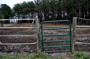 horses 2 on Dec 31 2014 - Copy