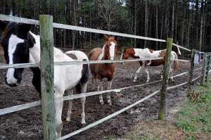 horses 6 on Dec 31 2014 - Copy